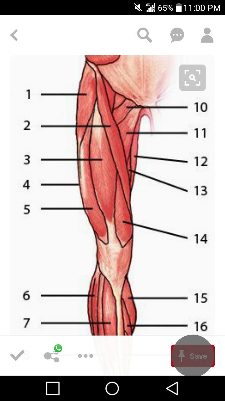 Anatomy test | Anatomy test | Pinterest | Anatomy, Human anatomy and ...