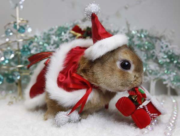 A rabbit dressed as Santa Claus helps Japan celebrate