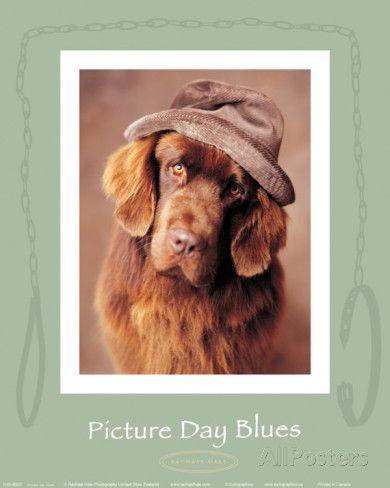 Picture Day Blues Juliste tekijänä Rachael Hale AllPosters.fi-sivustossa