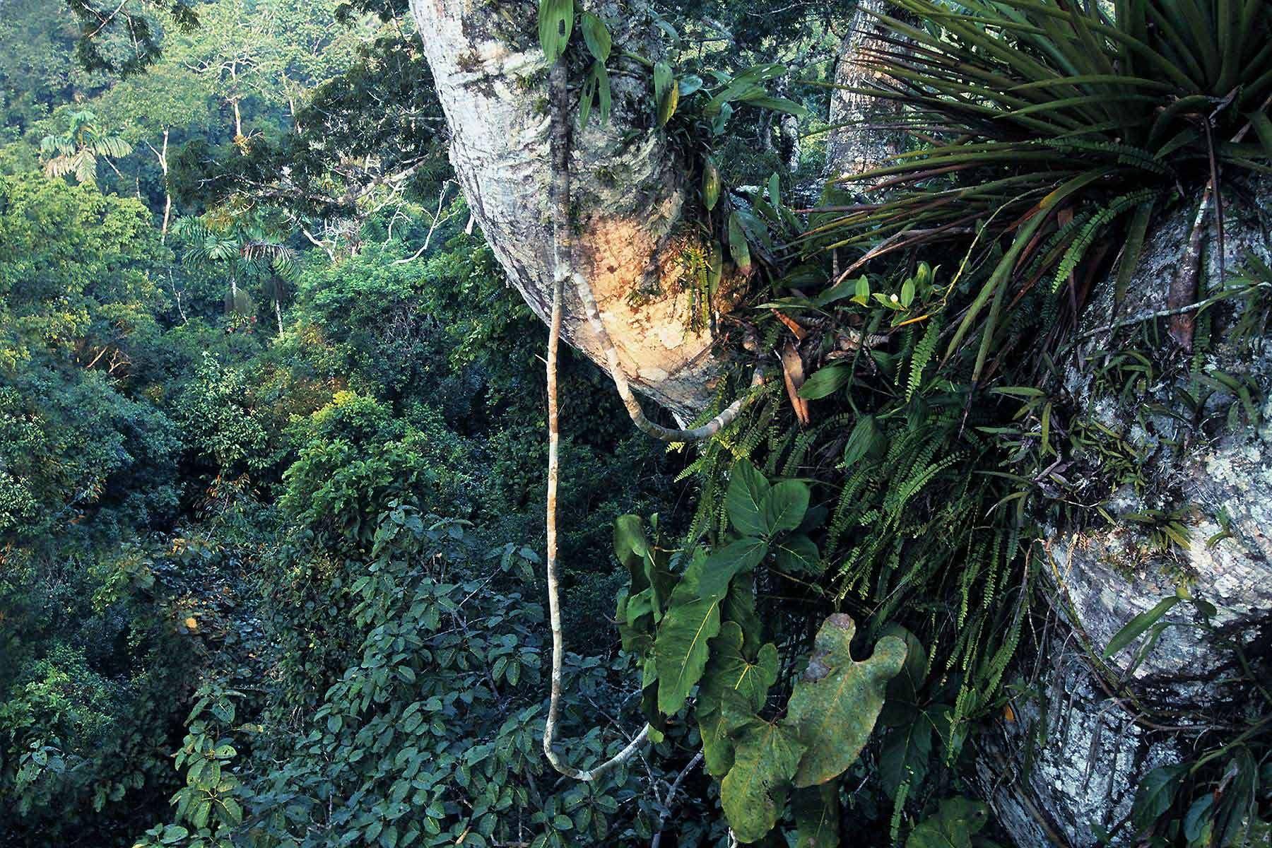 Amazon Rainforest  Google Search