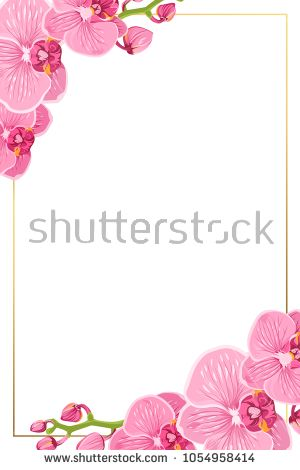 Pink purple bright exotic orchid phalaenopsis flowers. Shiny golden ...
