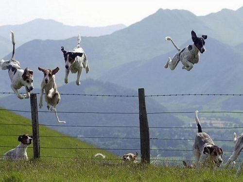 Who doesn't smile when they see flying dogs!