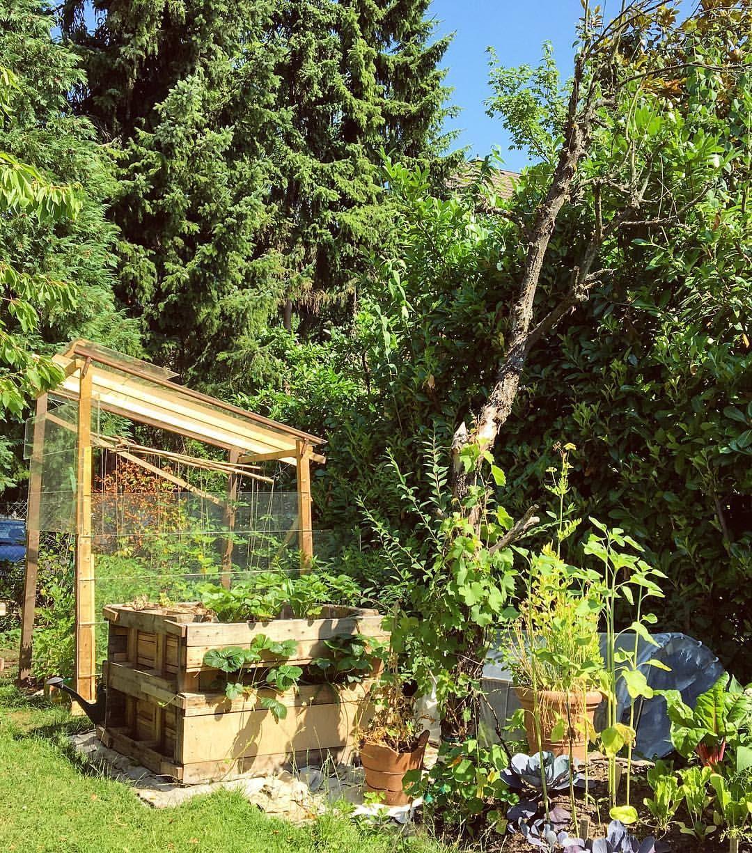 Und Im Tomatenhaus Und Hochbeet Wachst Noch Viel Mehr Leckeres