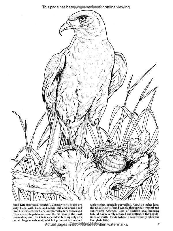 Birds Of Prey Coloring Book Dover Nature Amazonco