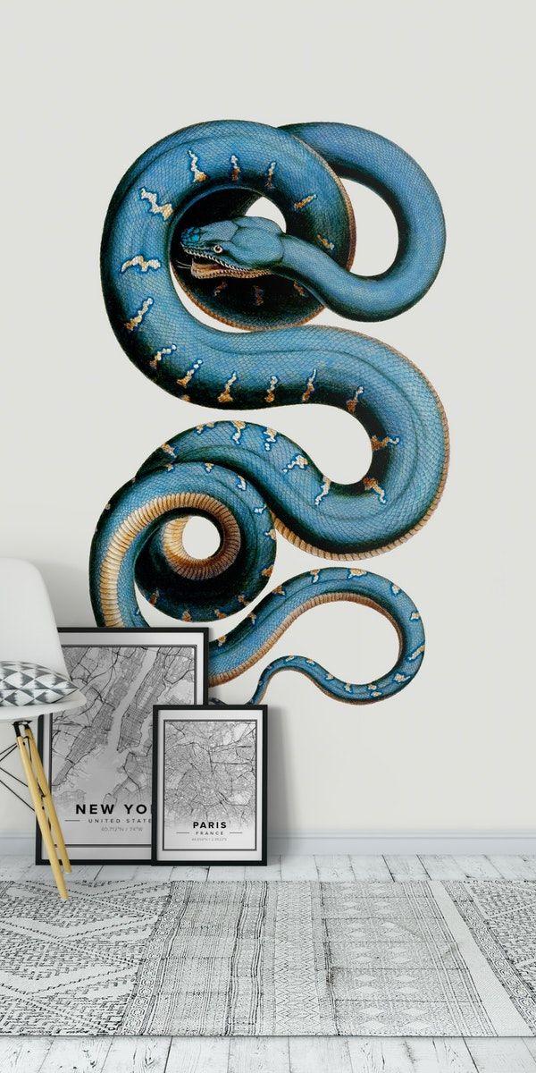 Snake Wall mural in 2020 Snake wallpaper, Wall murals