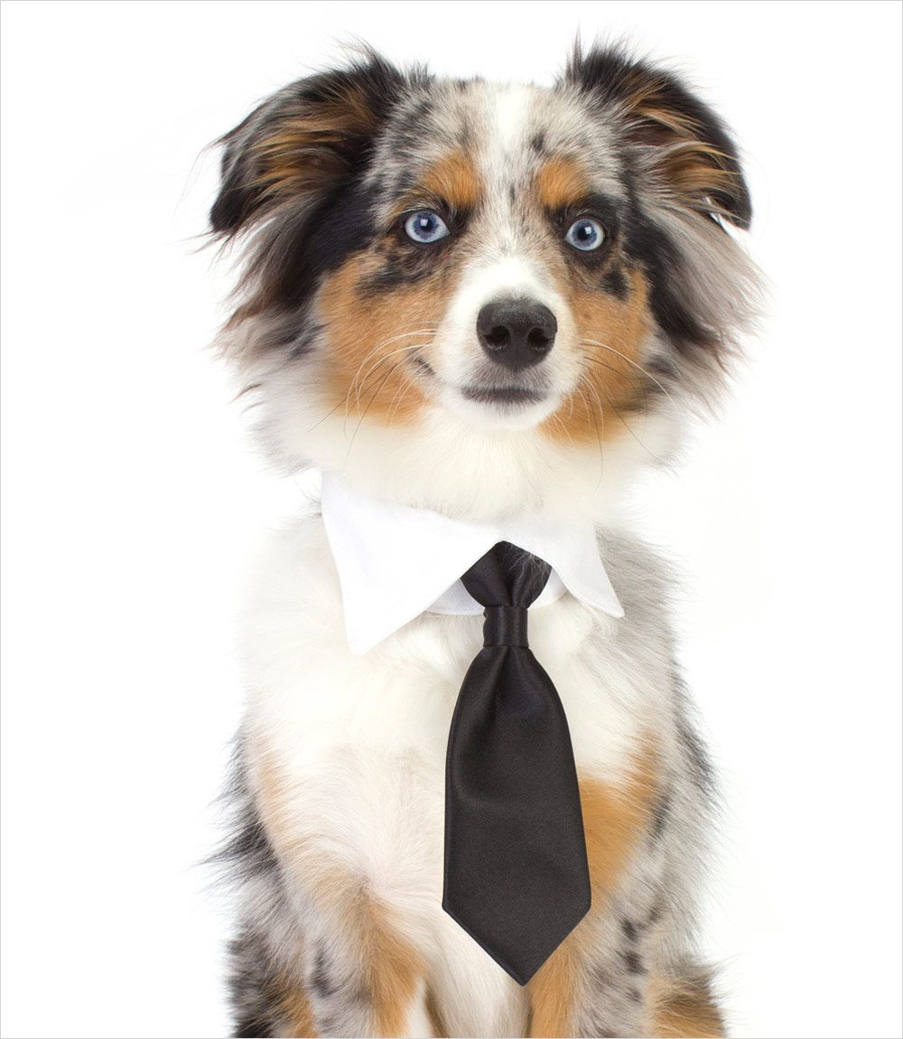 How To Make A Necktie For A Dog
