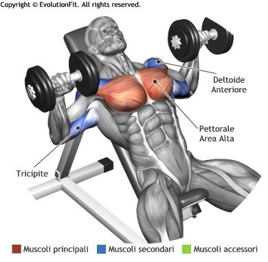 Panca Inclinata Manubri Gym Bodybuilding Pinterest