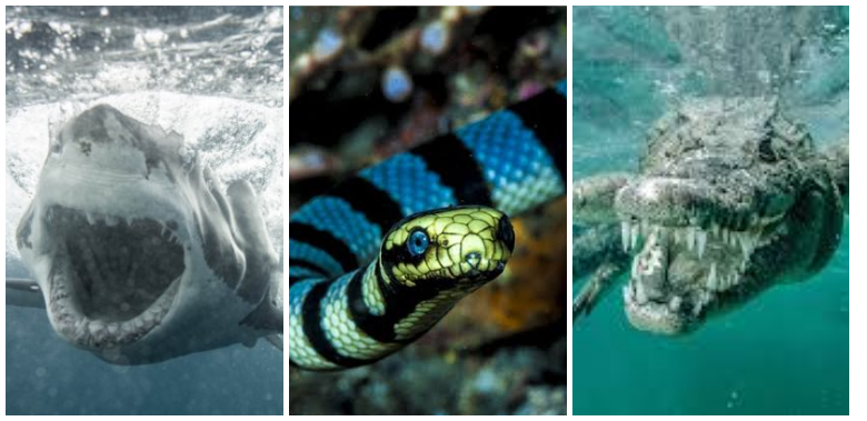 Most Horrifying And Deadliest Monsters Inside Water