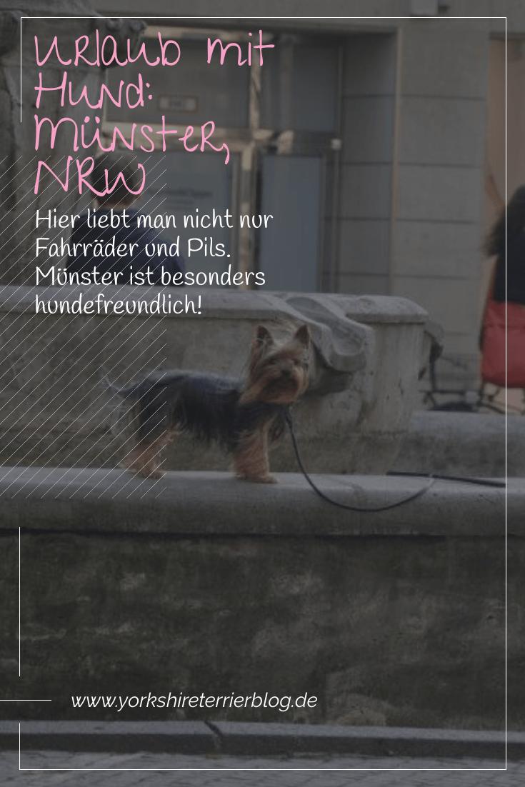Urlaub Mit Hund Munster Nrw Mit Bildern Urlaub Mit Hund Yorkshire Terrier Hunde