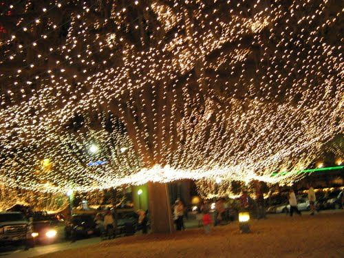 Christmas Event In Florida.Canopy Of Christmas Lights Ocala Florida So This Is