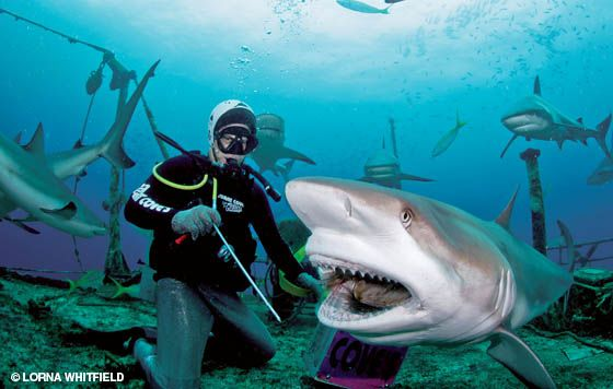 17 Best images about underwater on Pinterest | Deep sea diver ...