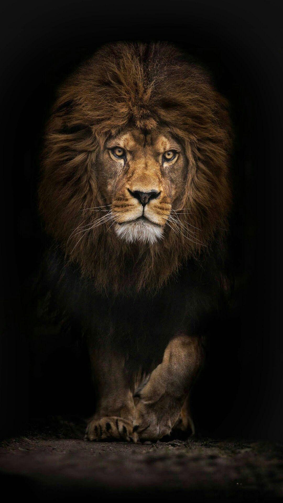 Beau Dessin A Imprimer Lion Et Lionne