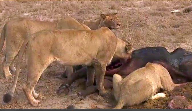 #nukhuma with @BrentLeoSmith on #SafariLive