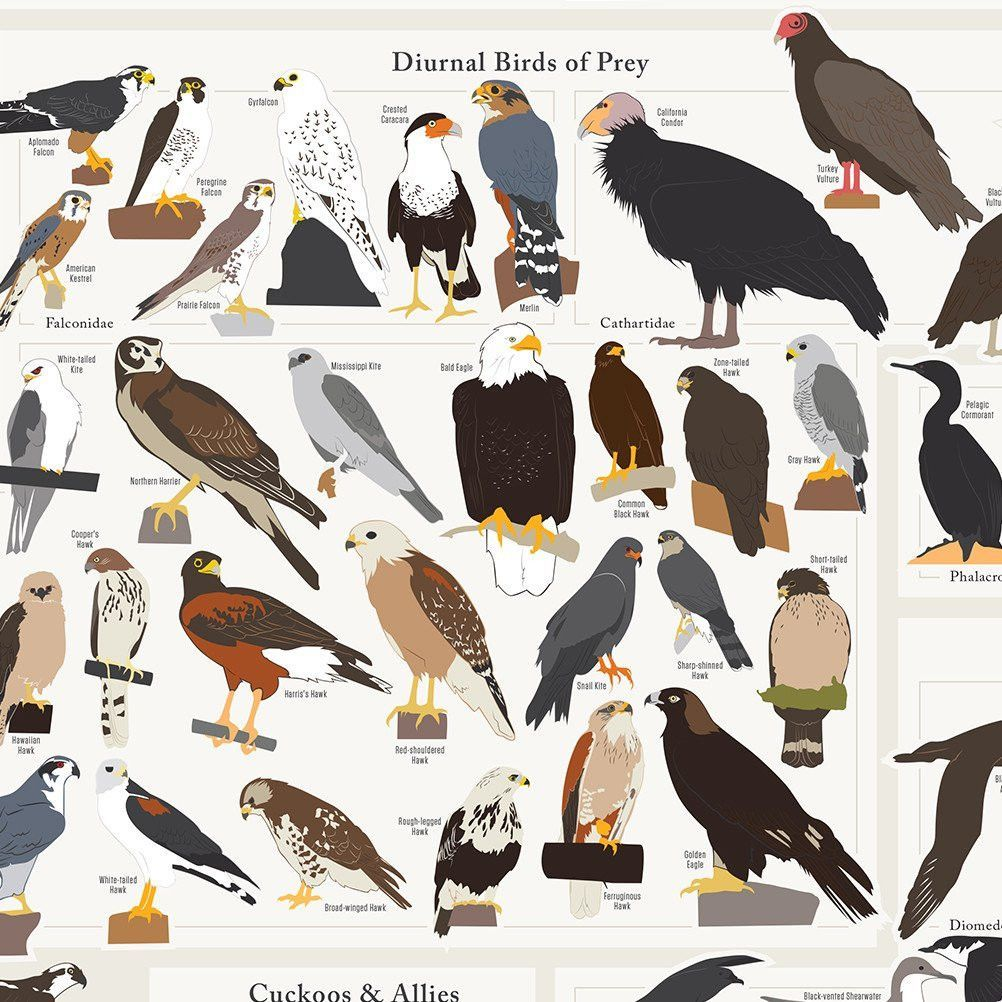 Birds Pop Chart Lab Has Captured The Stunningly Beautiful Diversity Of Avian Life In North America A Labor Love That Took More Than 400