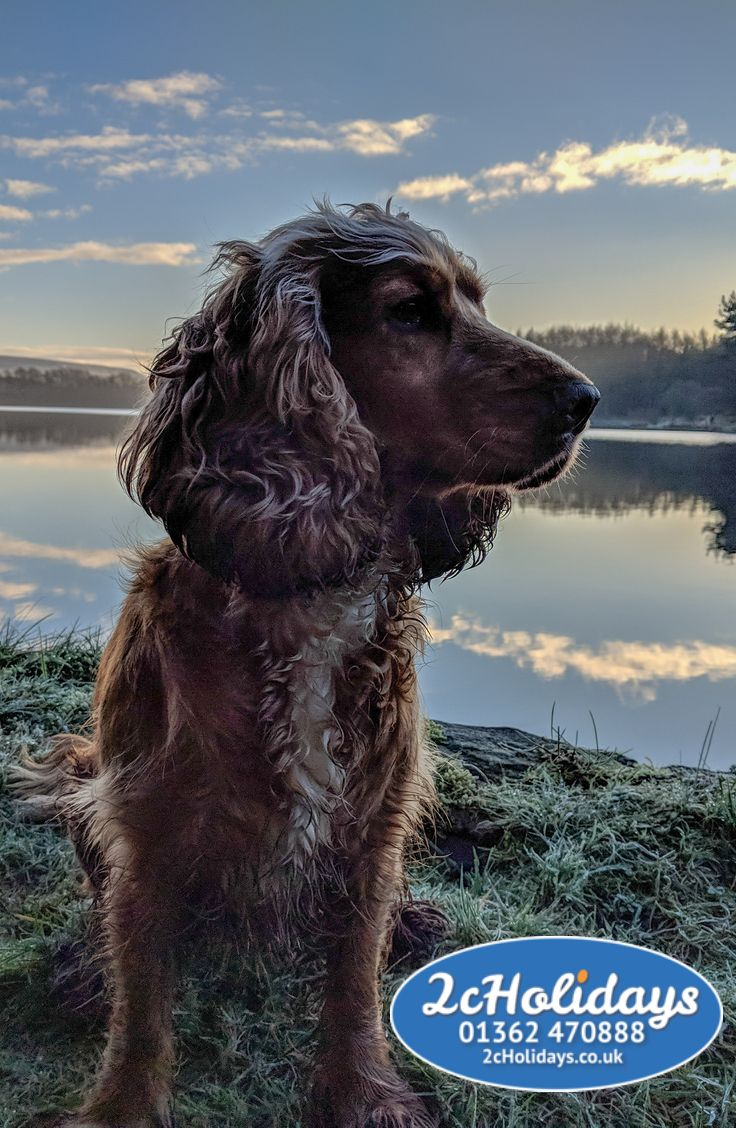 Many holidays homes available to rent with dog friendly holiday homes near coastal areas in the UK. Book 2 night breaks are available when you book a holiday home to rent. Great deals on breaks with your dogs on many different holiday homes. #englishspaniel #spanieldogs #dogholidays #holidayhomes #2nightholidays #greatdeals #coastal