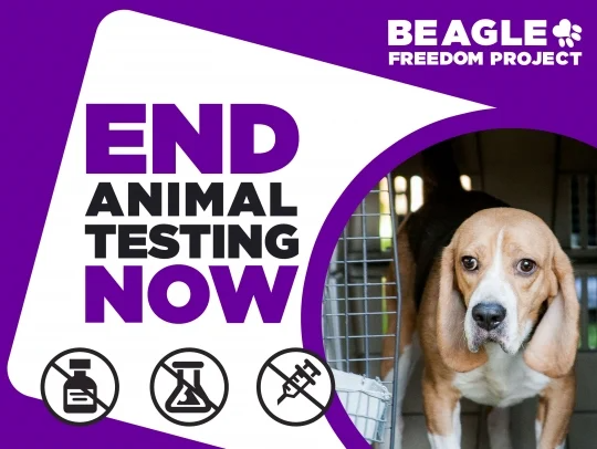 Donate To Why Beagles In 2021 Beagle Freedom Project Beagle Donate