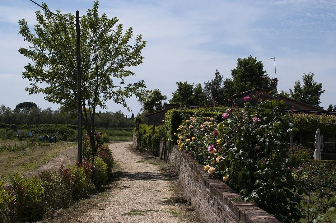 Venezia è anche questo. Sia in centro storico che nelle isole si possono trovare giardini privati o meno e angoli verdi che non penseresti mai di vedere. Questo scorcio è nell'isola diTorcello by stefitiz