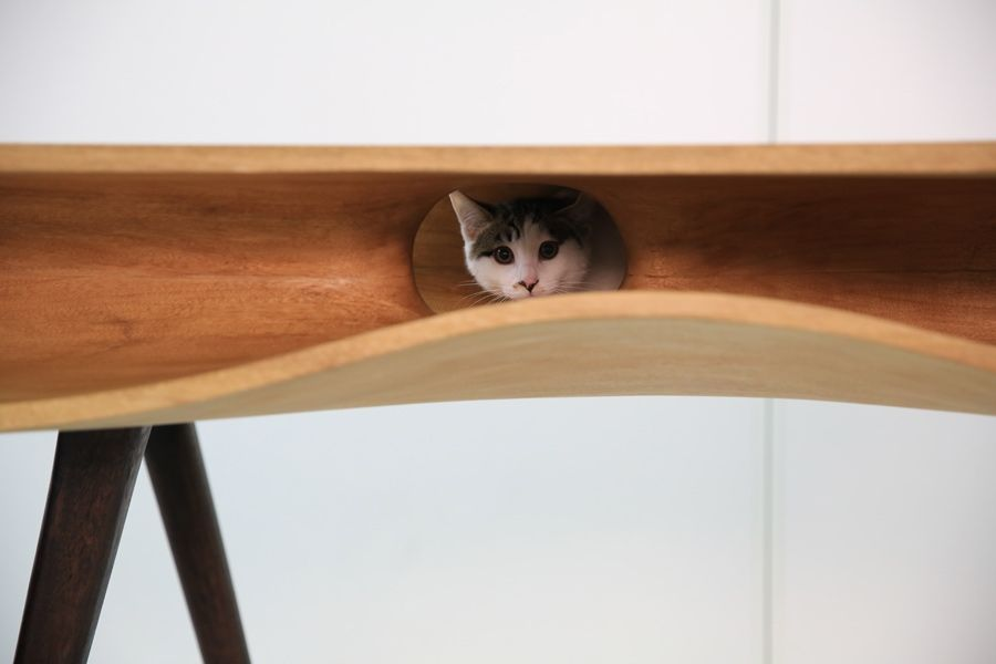 This #table allows pet owners to share their work space with a feline friend!  Playful 'CATable' by Ruan Hao for LYCS architecture. #design #interior #ddn
