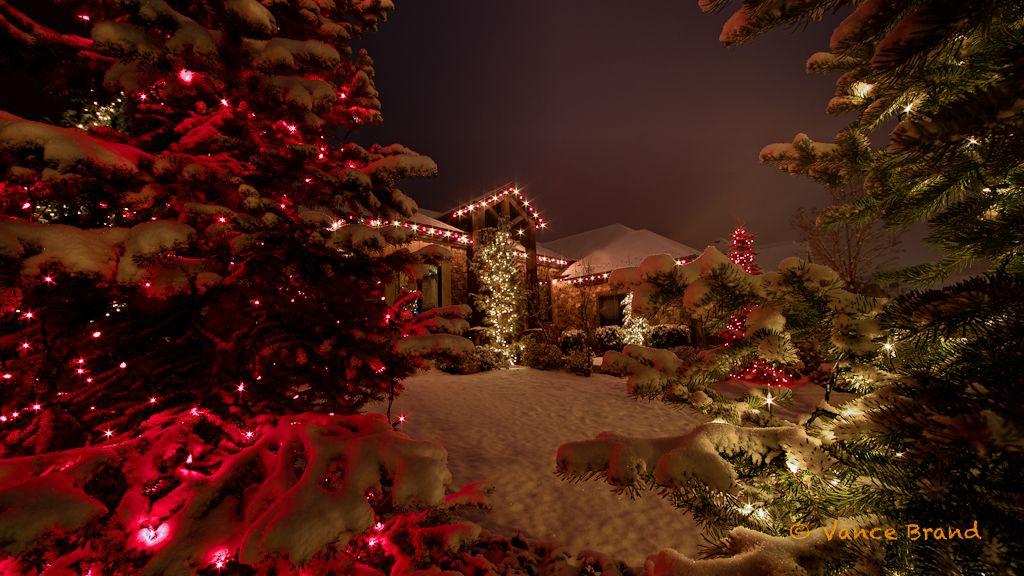 christmas lights Christmas Tree Gallery Christmas Light Photos