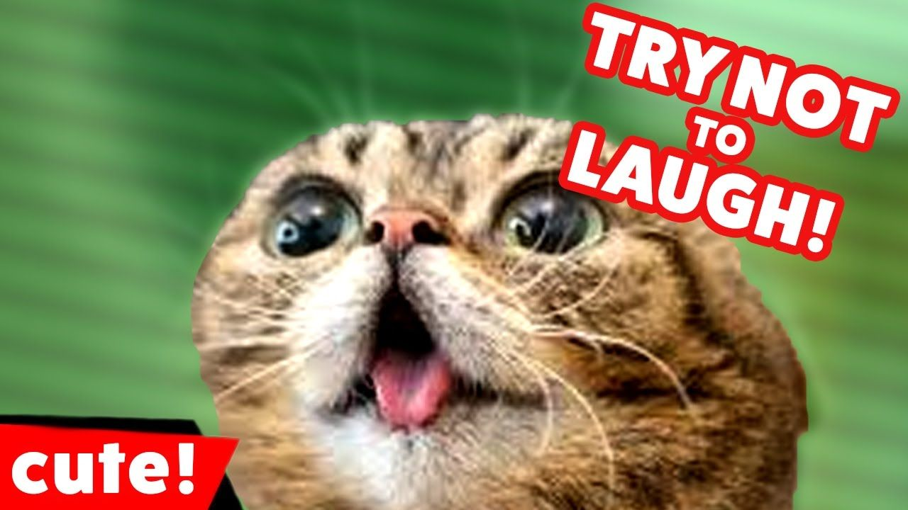 Try Not To Laugh Challenge Funny Cat & Dog Vines