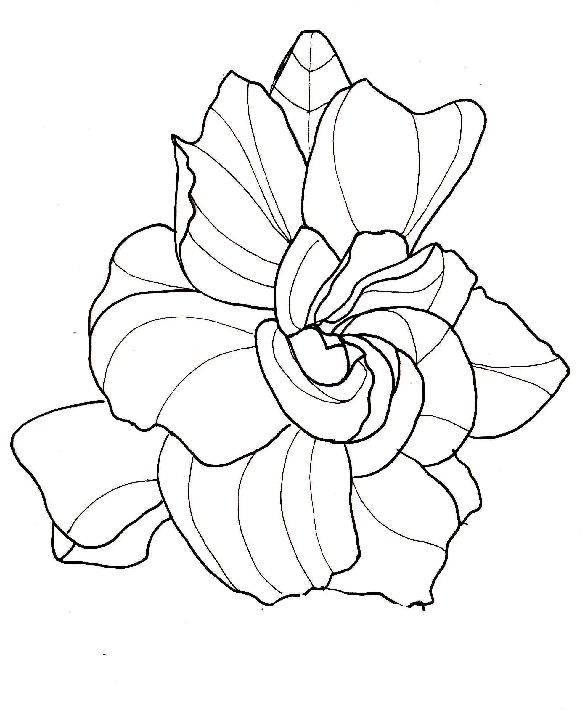 How To Draw A Gardenia : gardenia, Drawing, Flowers, Gardenia, Flower, Drawings,, Drawing,, Tattoo