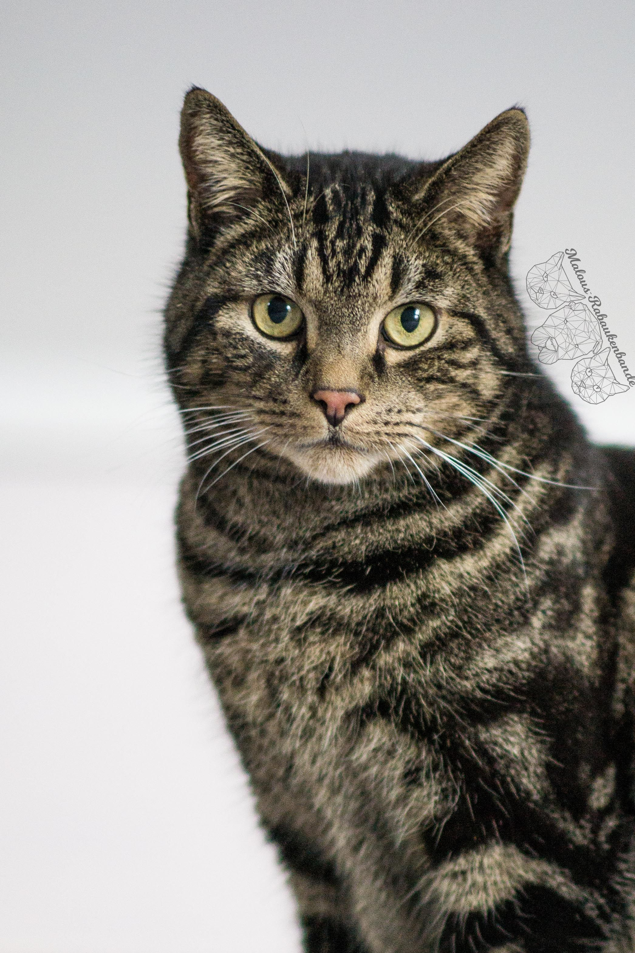 Pin Von Anna Auf Cute Katzenbabys Katzen Susse Tiere