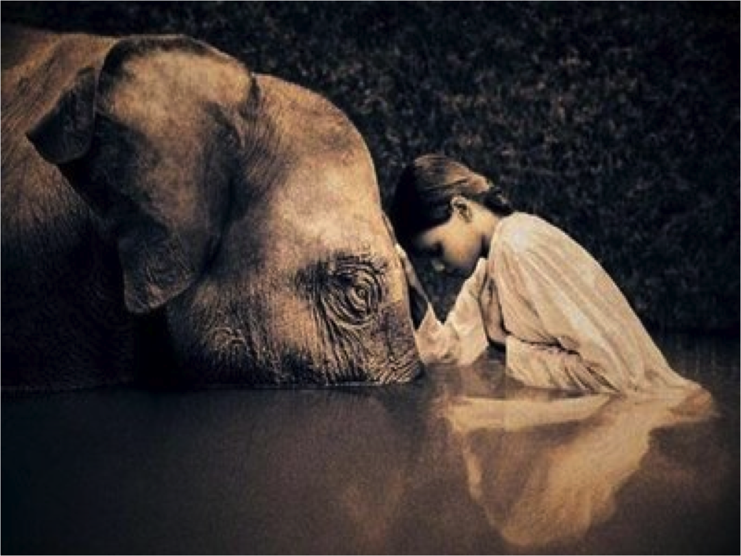 Pin By Olivia Grace On Photography Pinterest Wildlife And Animal