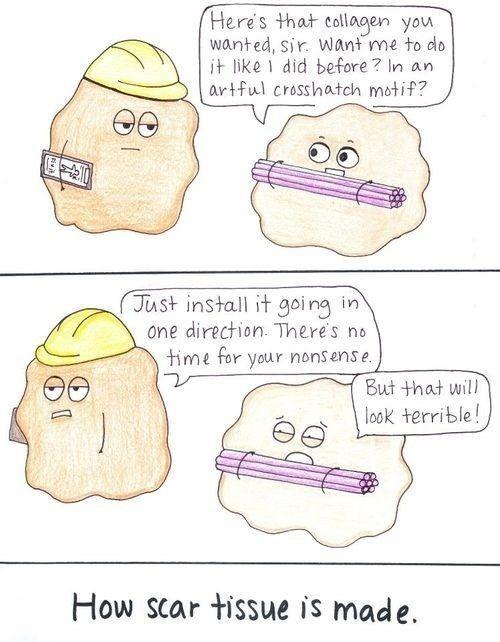 Anatomy Jokes Anatomy Pinterest Anatomy