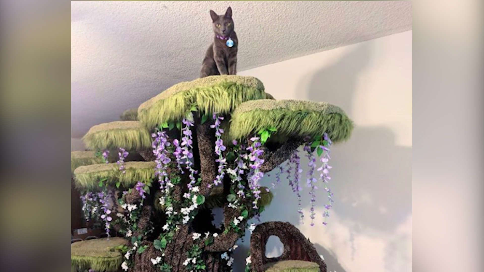 Special Needs Cat Gets The Most Magical Cat Tree Persian Cat