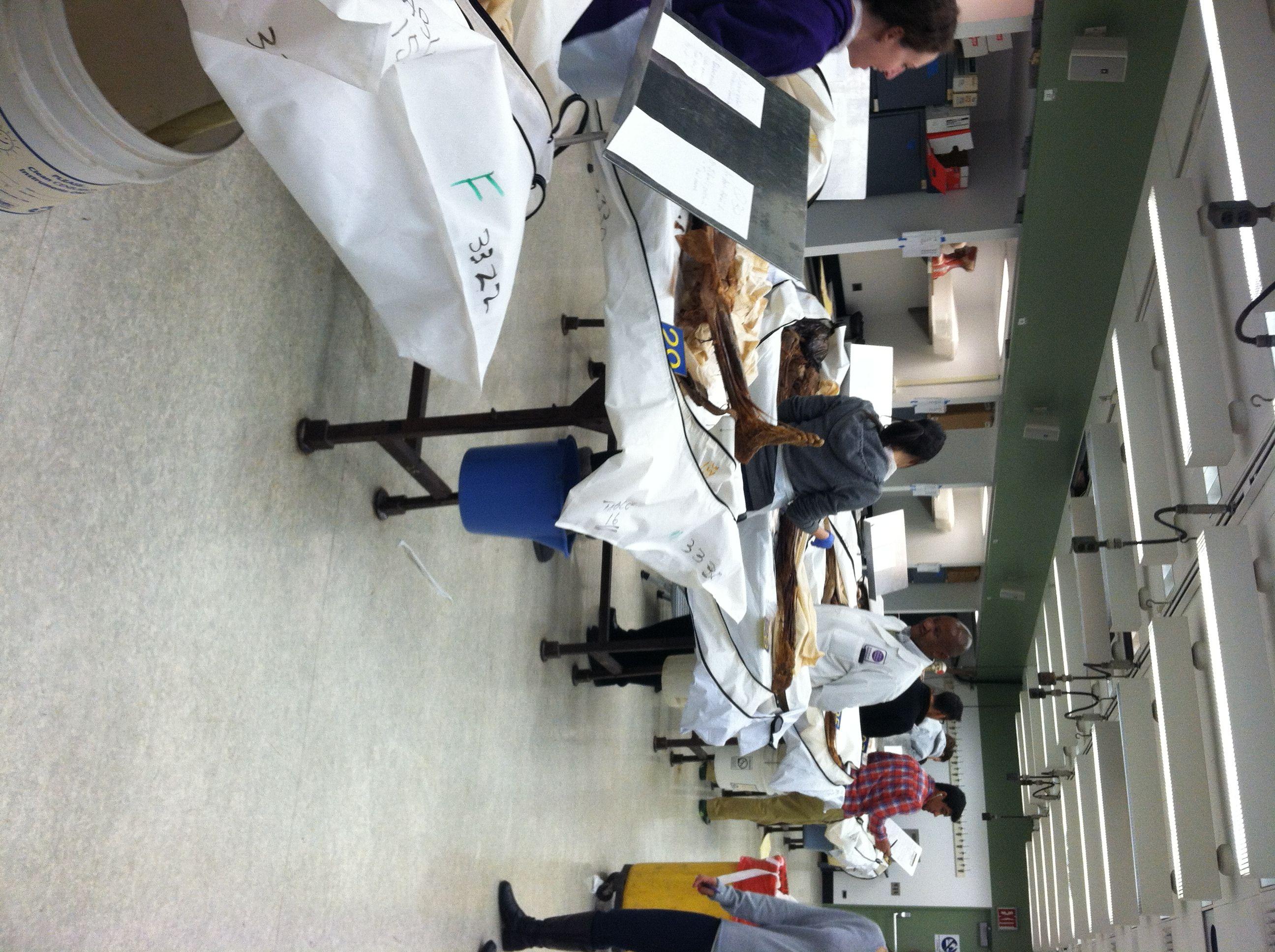 Inside a Gross Anatomy Lab: The Human Body as Textbook | Gross ...