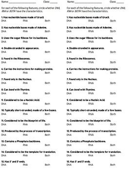 DNA, RNA, Protein Synthesis Worksheet / Study Guide   Worksheets ...