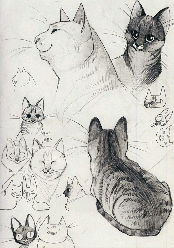 Pin de Paloma Montero en How to draw   Pinterest   Gato y Dibujo