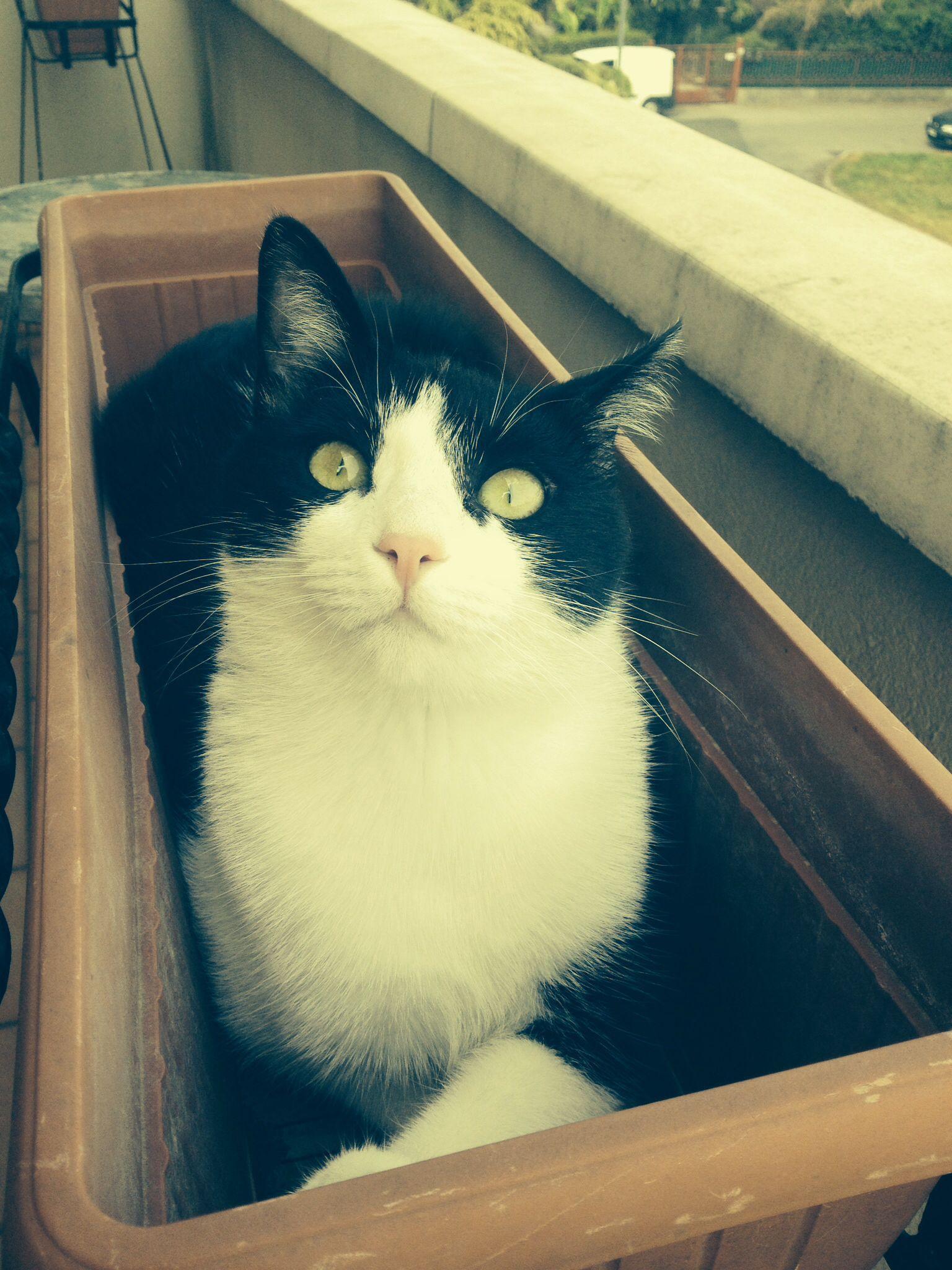 Ollie gatta da portafiori