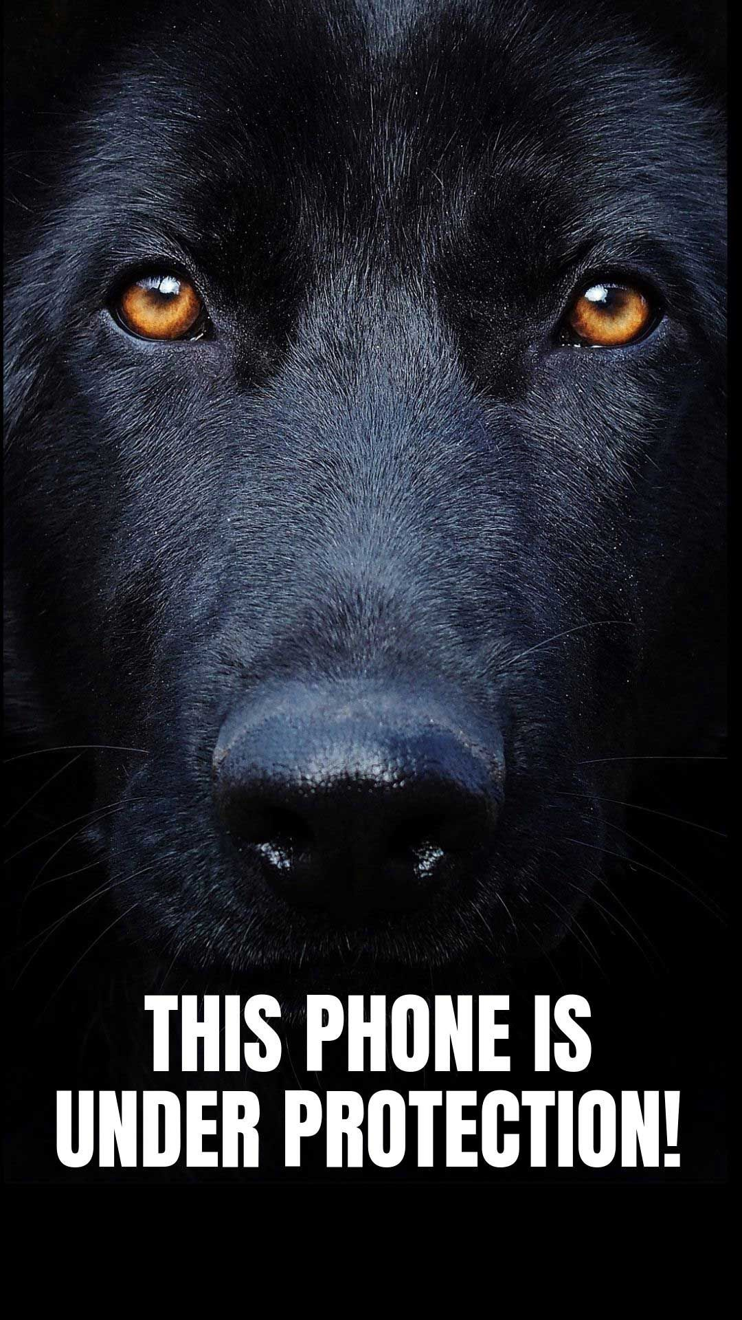 20 Free Dog Wallpapers I Phone And Android 20 Hd Sized Homescreen Wallpaper Dog Pictures Dog Wallpaper Dog Wallpaper Iphone Dog Background