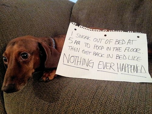 The Long And Short Of It All A Dachshund Dog News Magazine Dog