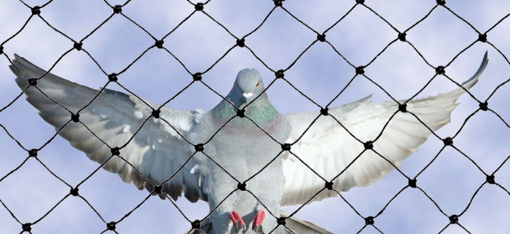 Looking For Pigeon Safety Net Bangalore Services Online Hicare Specializes In Residential Bird Netting Services Pigeon Netting Bird Netting Bird Bird Control