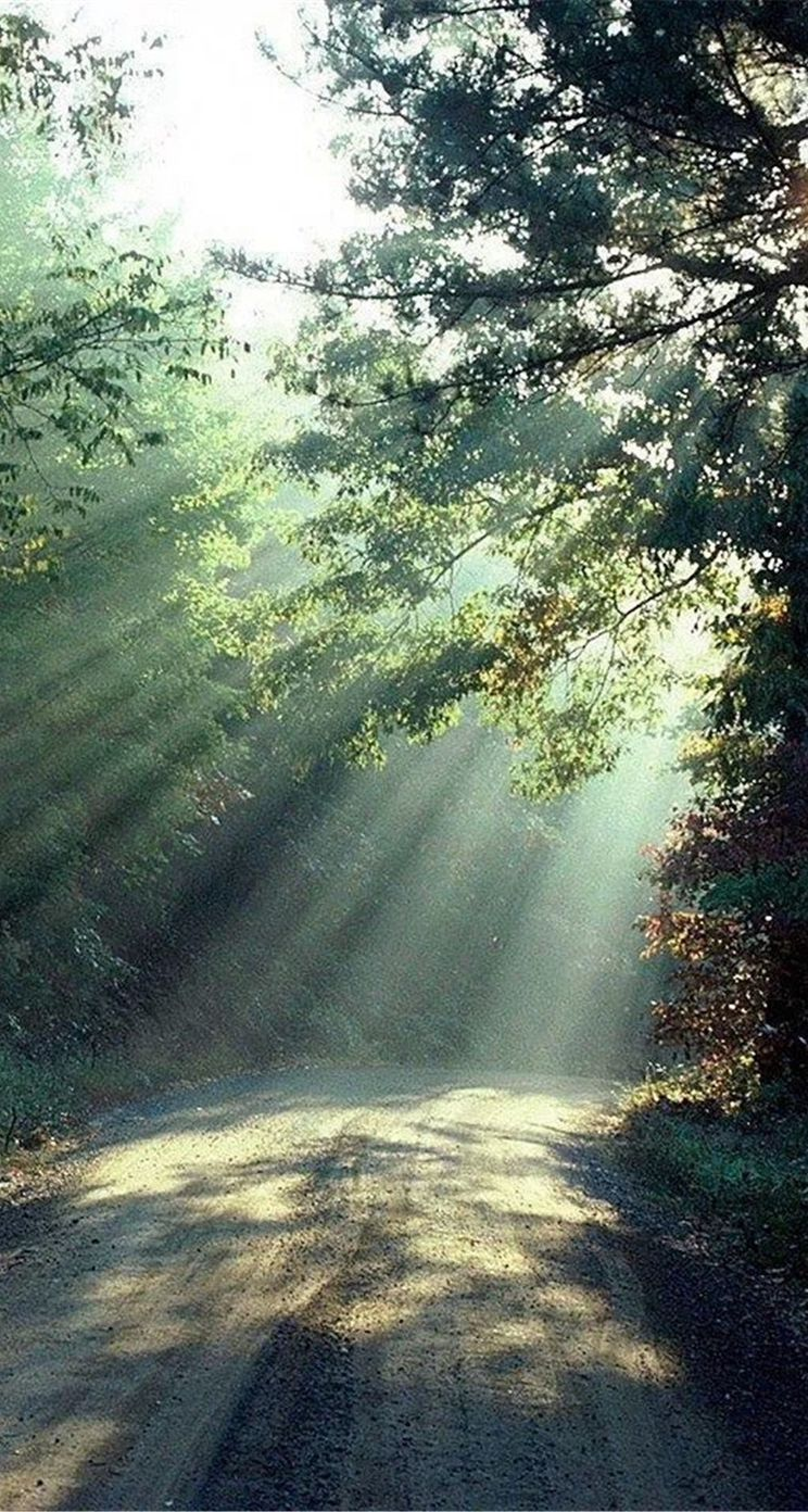 nature-forest-sunlight-trees-road-iphone-5s-parallax-wallpaper