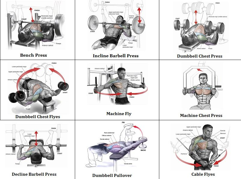 Chest Exercises And Their Muscles