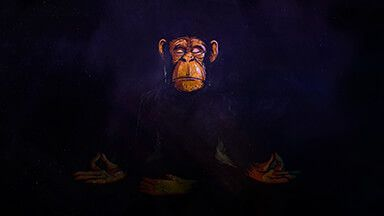 Space Chimp Chromebook Wallpaper Chromebook, Wallpaper