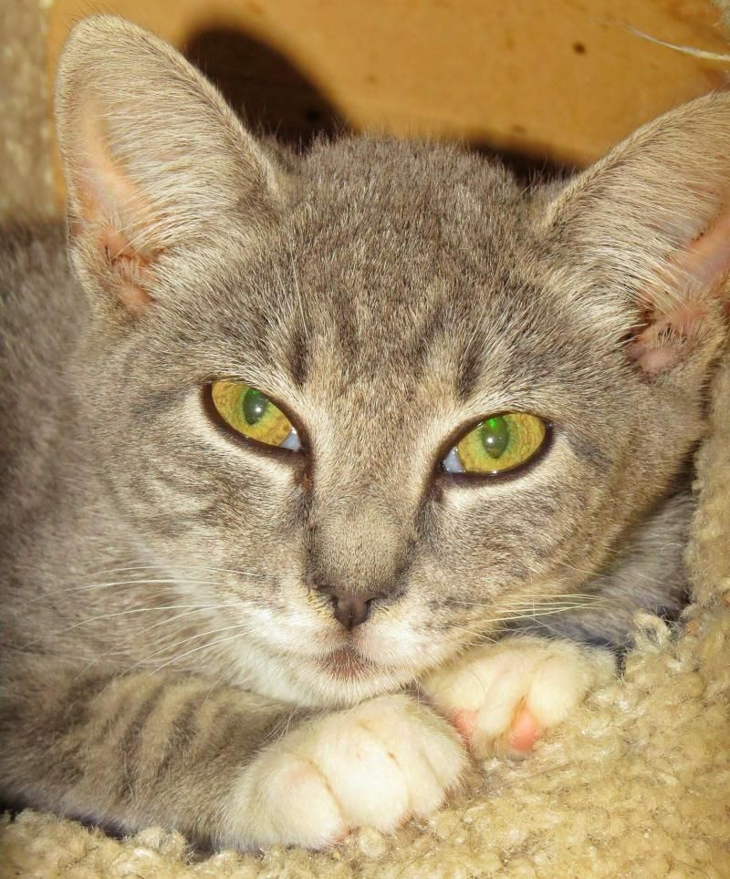 "Adopt 6363 ""Tina"" on Animal help, Animals, Cats"