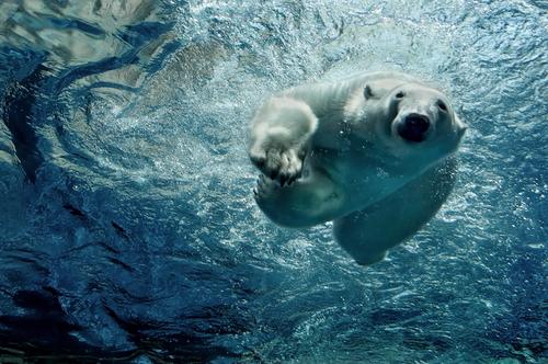 Artic swim