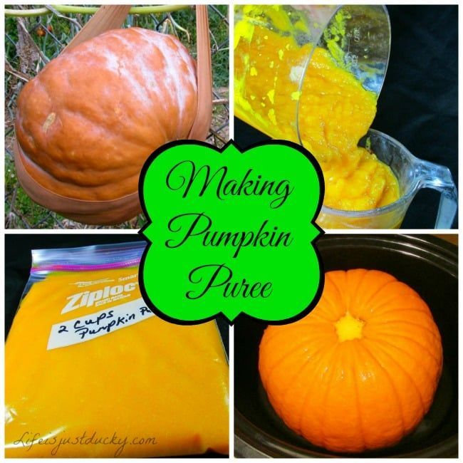 Cooking Pumpkin And What To Cook With It. #pumpkinpureerecipes How To Cook You Pumpkin and what to do with it. This explains step by step how to make pumpkin puree. Then gives you some great recipes that use your pumpkin that your family will love. #pumpkinpureerecipes