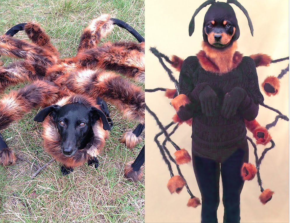 A Diy Vid Of How To Make A Mutant Spider Dog Costume For Written