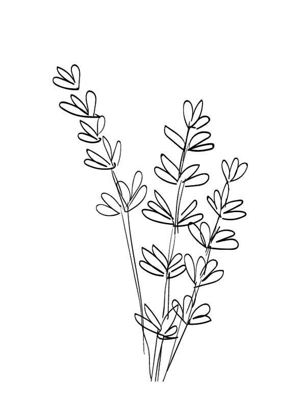 Line Drawing Lavender : Image result for line drawing lavender flower