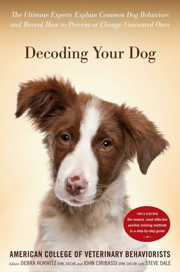 Can Dogs Feel Guilt 10 Common Myths About Dog Behavior Dog
