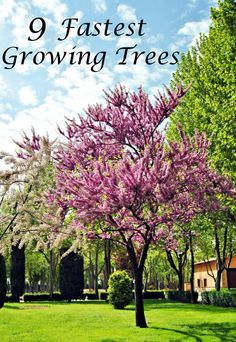 when you plant fast growing trees you might want to do a little research and see if the
