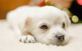 Dog Breeding Dog Kennel Dog Boarding Grooming Baby Puppies Puppy Wallpaper Cute Dogs