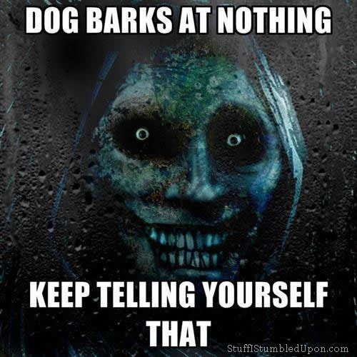 Truly terrifying dog barks at nothing keep telling Why does my dog bark when i leave