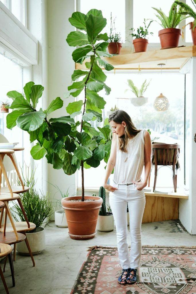 La fabrique d co plantes g antes dans la maison une jungle d 39 int rieur du vert - Arbre deco interieur ...