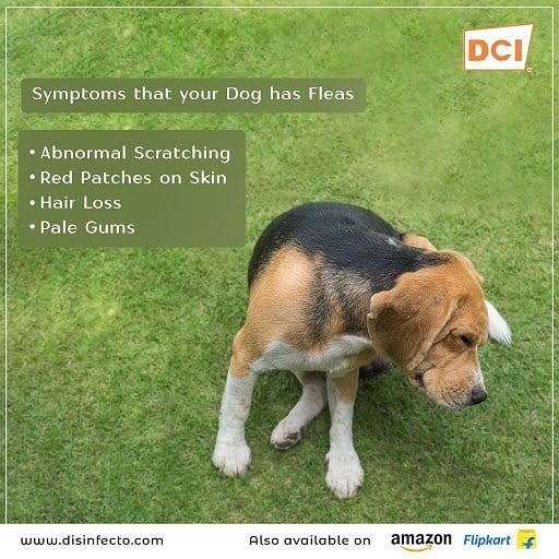 Avoid Abnormal Scratching, Hair Loss And Red Patches On
